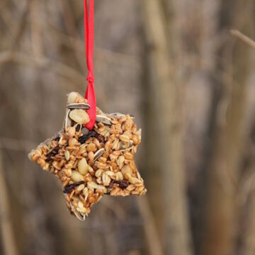 ZAWIESZKI I KULE TŁUSZCZOWE – zrób sam smakołyki dla ptaków