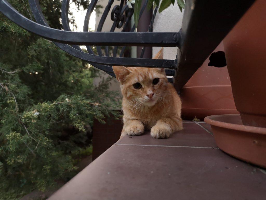 Chowający się kot