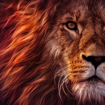 LEW – król wszystkich zwierząt