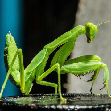 Kamuflaż w świecie owadów